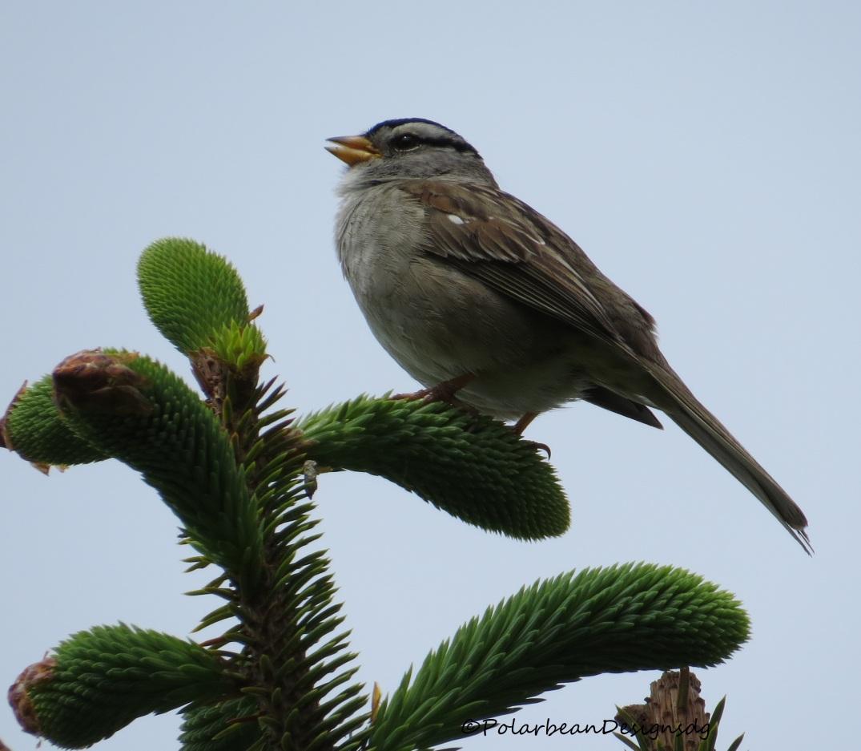 birdcape