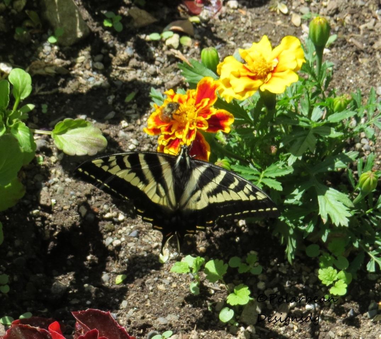 butterflybee