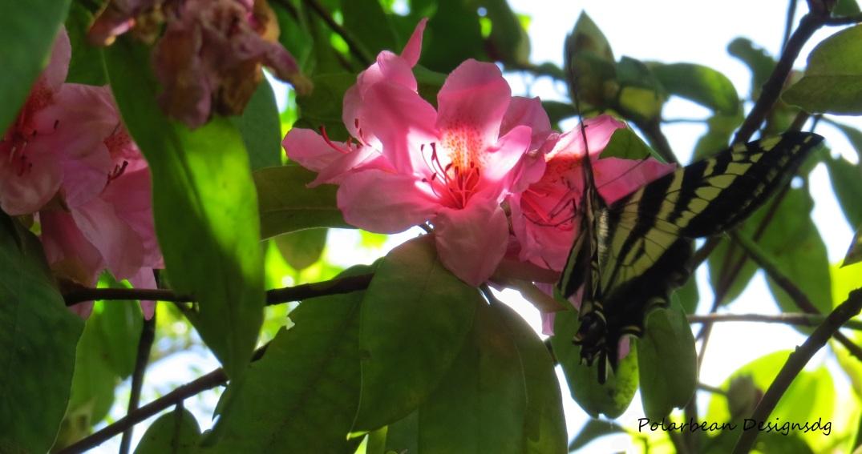 Butterflyflower1